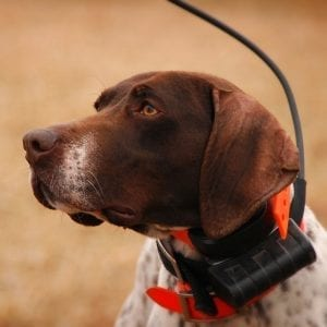 Tracking Collars - Collar Accessories